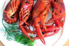 Cooked crayfish on white plate closeup Royalty Free Stock Photography