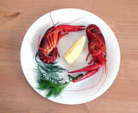 Cooked crayfish on white plate closeup Royalty Free Stock Image