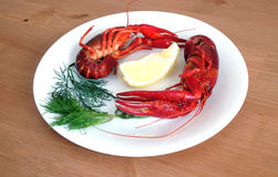 Cooked crayfish on white plate closeup Royalty Free Stock Images