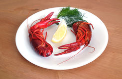 Cooked crayfish on white plate closeup Royalty Free Stock Photo