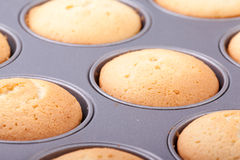 Cooked cupcakes Stock Image