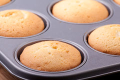 Cooked cupcakes in tray Royalty Free Stock Photography