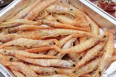 Cooked deep-water rose shrimps Stock Image