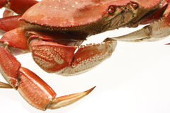 Cooked dungeness crab Royalty Free Stock Images