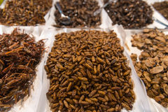 Cooked, Edible Insects and Grubs for Human Consumption at a Publ Stock Photography