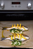 Cooked fish sea bream fish. Royalty Free Stock Images
