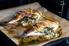 Cooked fish sea bream fish. Royalty Free Stock Image