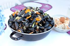 Cooked french bouchot mussels Stock Photography
