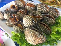 Cooked fresh cockle seafood with spicy sauce stock photography