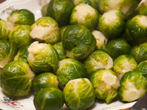 Cooked fresh green Brussel Sprouts Royalty Free Stock Image