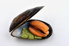 Cooked fresh mussel with some herb butter. Cooked fresh organic mussel with some herb butter stock images