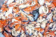 Cooked fresh mussels Stock Photo