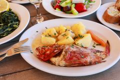 Cooked fresh red scorpionfish sarved with boiled potatoes in the greek tavern. Cooked fresh red scorpionfish sarved with boiled potatoes on white plate near stock photos