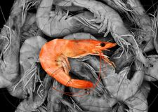 Cooked fresh shrimps, Steamed shrimp, Seafood abstract royalty free stock image