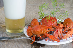 Cooked freshwater crayfish, with dill and beer Royalty Free Stock Images