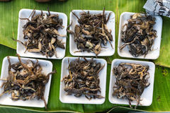 Cooked frogs royalty free stock images