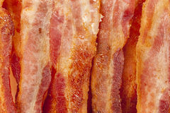 Cooked Greasy Bacon Stock Photos