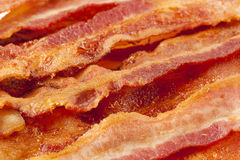 Cooked Greasy Bacon Royalty Free Stock Image