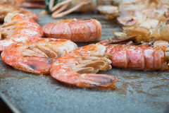 Cooked grilled shrimps Royalty Free Stock Image