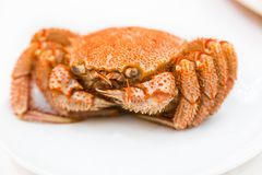 Cooked hairy crab kegani in Japanese or horsehair crab served. Whole on a white plate at a Japanese restaurant, famous for the sweetness of its meat Stock Image