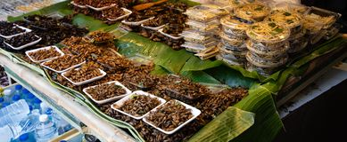Cooked insects stand on the streets of Thailand stock image