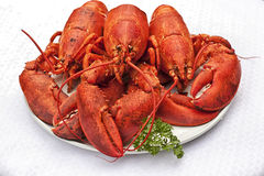 Cooked Lobster Stock Photos
