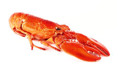 Cooked lobster Stock Photography