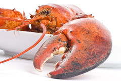 Cooked Lobster Stock Image