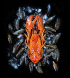 Cooked lobster on a bed of mussels with ice Royalty Free Stock Image