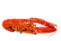 Cooked Lobster Royalty Free Stock Image