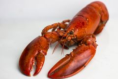 Cooked lobster, close up. stock photo