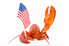 Cooked lobster with flag and raised claw Royalty Free Stock Images