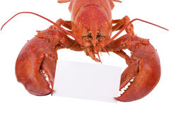 Cooked lobster Royalty Free Stock Images