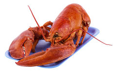 Cooked lobster Stock Images