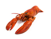 Cooked Lobster Isolated on White Stock Photos