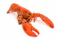 Cooked Lobster Isolated on White Royalty Free Stock Images