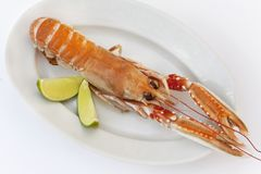 Cooked lobster and lemon Stock Photos