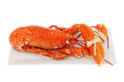 Cooked lobster Royalty Free Stock Photography