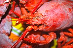 Cooked Lobster up-close Stock Photos