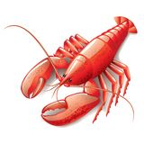 Cooked lobster on white. Photo-realistic vector illustration stock illustration