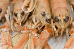Cooked lobsters. Cooked langouste facing the camera. Close view Stock Photos
