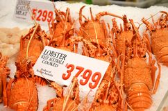 Lobster at fish market royalty free stock photo
