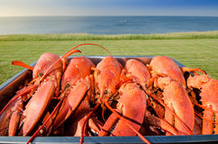 Cooked lobsters on platter in ocean setting Royalty Free Stock Image