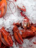 Cooked lobsters. View at the display case in the store with cooked lobsters on the ice royalty free stock images