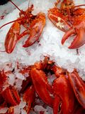 Cooked lobsters. View at the display case in the store with cooked lobsters on the ice royalty free stock photography