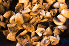 Cooked mushrooms Stock Photography