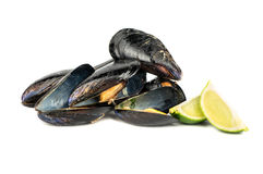 Cooked mussel in shell Royalty Free Stock Photos