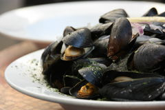 Cooked mussels. Cooked mussles served on a plate Stock Image