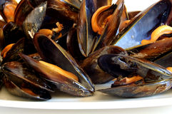 Cooked mussels Royalty Free Stock Image