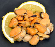 Cooked Mussels Stock Images